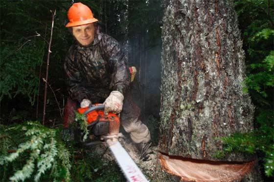 Cuando el rbol les tapa el bosque cada loco con su blog for Como talar un arbol